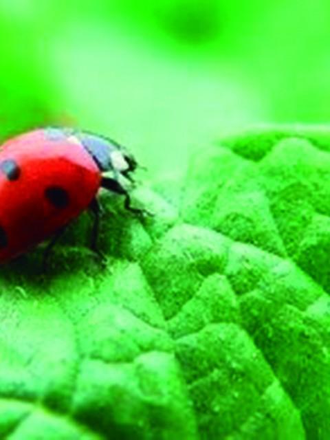 pellets y biomasa